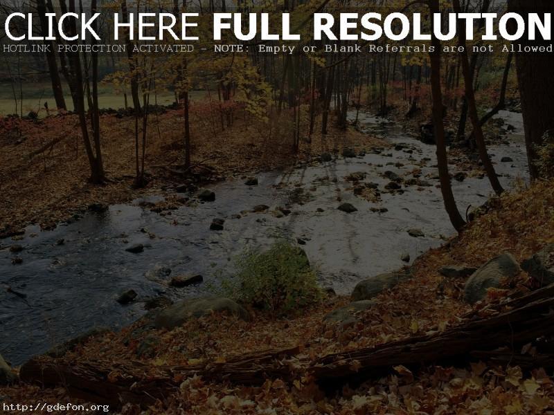 Обои Осень, листья, река фото картики заставки