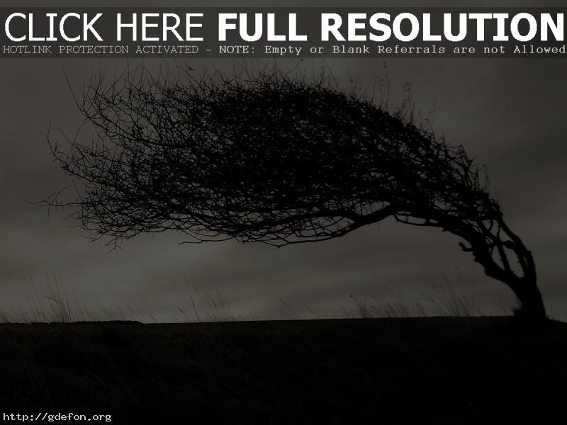 Обои Изогнутое дерево фото картики заставки