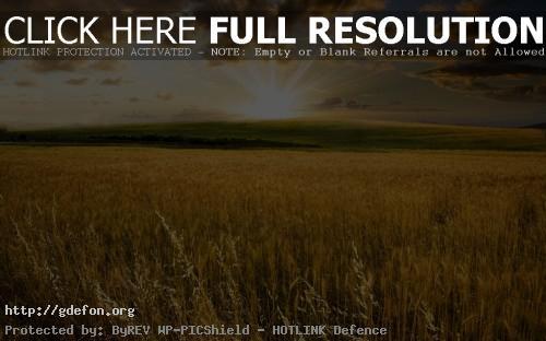 Обои Пейзажи, природа, поле, солнце, холмы, долина фото картики заставки