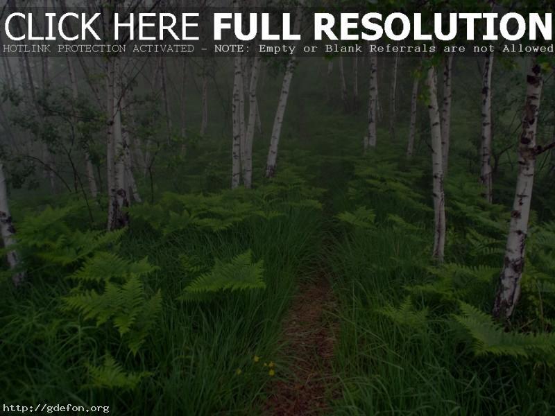 Обои Деревья, лес, папоротники, кусты, тропа фото картики заставки