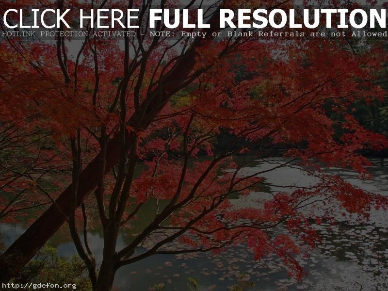 Обои Деревья, река, осень фото картики заставки