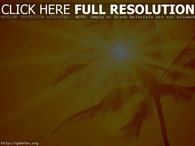 Обои Пальма, солнце, жара фото картики заставки
