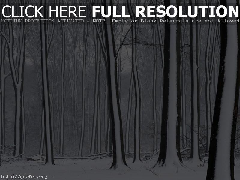Обои Деревья, снег, зима фото картики заставки
