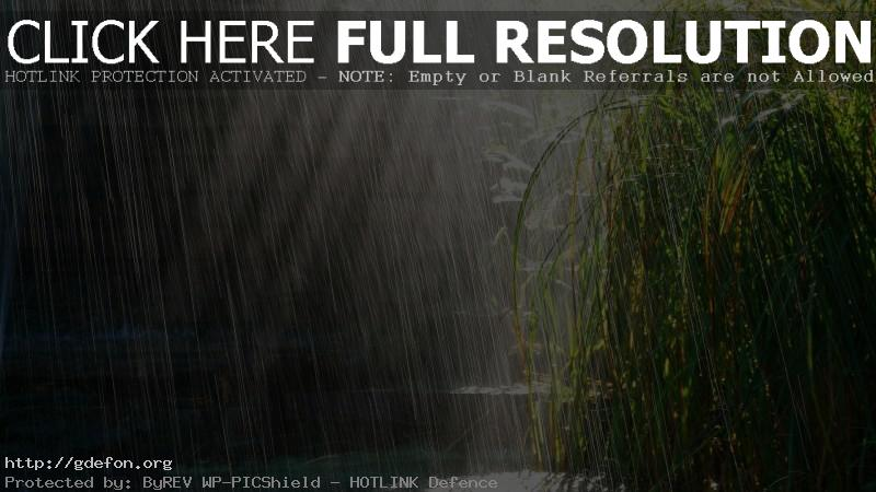 Обои Дождь, трава, солнце фото картики заставки