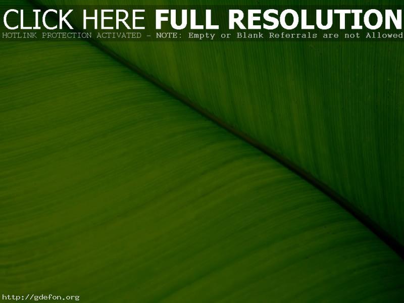 Обои Растение, зелень, лист, макро фото картики заставки