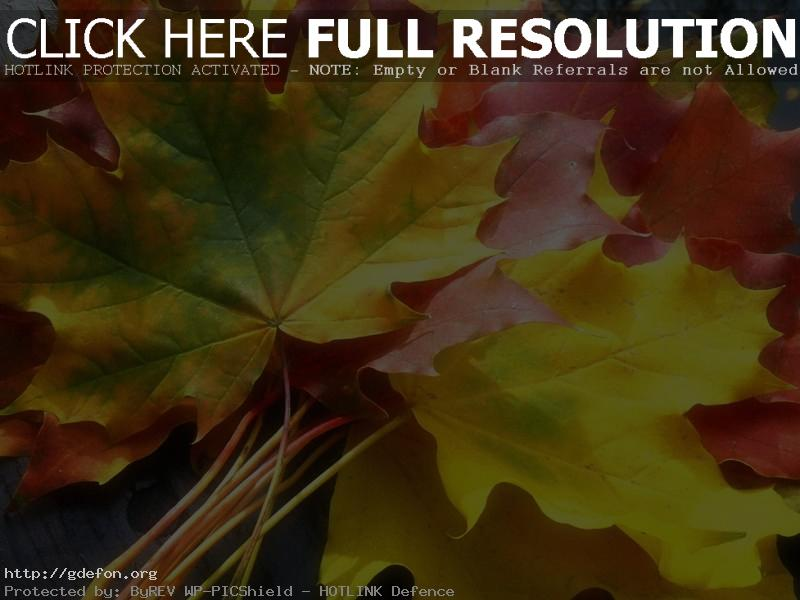 Обои Листья, клен, желтый, осень фото картики заставки