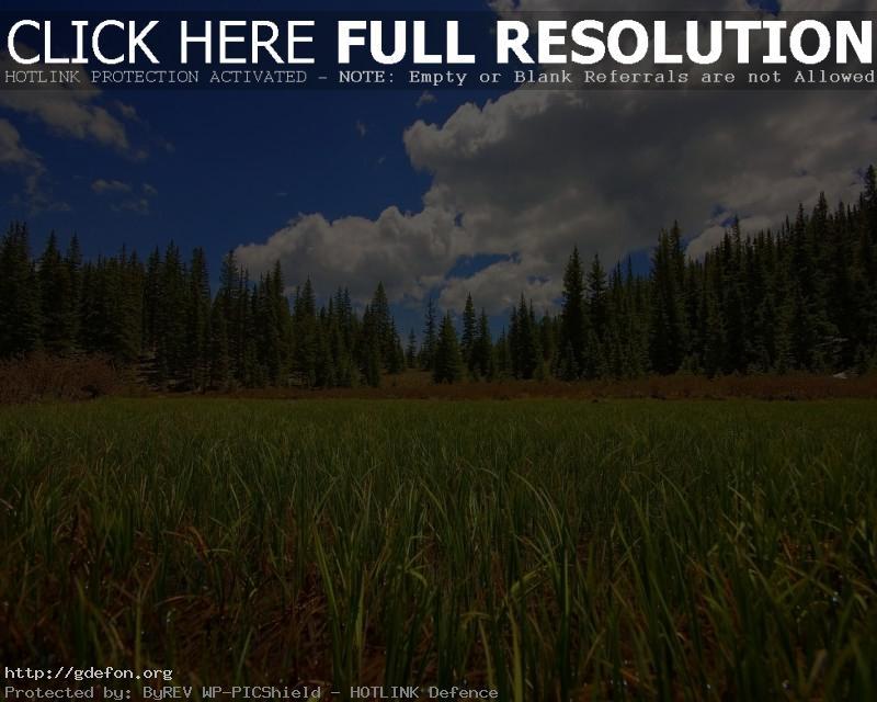 Обои Лес, поле, трава, небо фото картики заставки