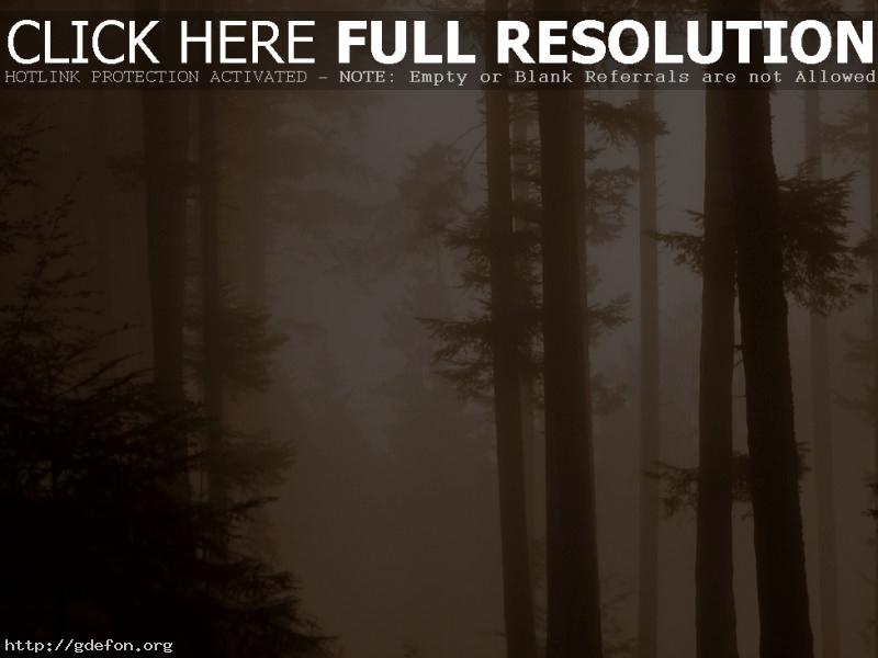 Обои Туман, сепия, лес фото картики заставки