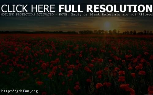 Обои Поле, цветы, мак, солнце фото картики заставки