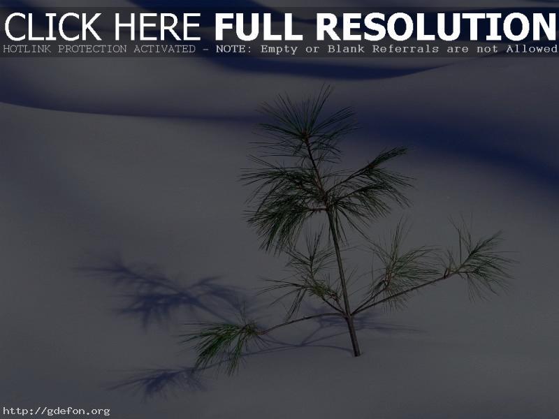 Обои Елочка в снегу фото картики заставки