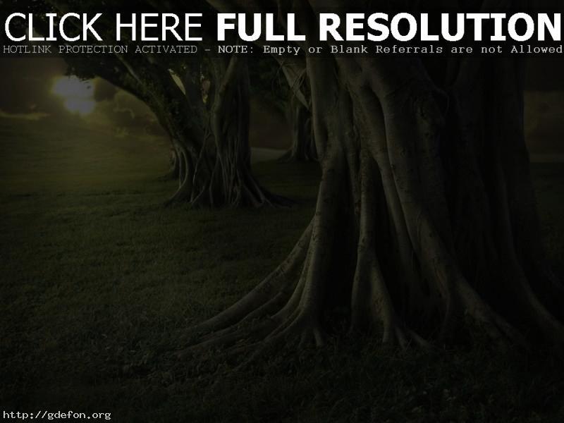 Обои Огромные деревья фото картики заставки