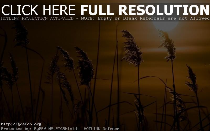 Обои Закат, солнце, камыши фото картики заставки