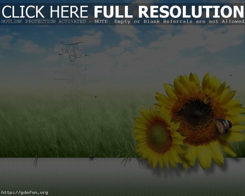 Обои Лето, подсолнухи, облака фото картики заставки