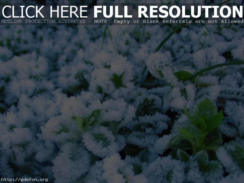 Обои Зима, иней, растения фото картики заставки