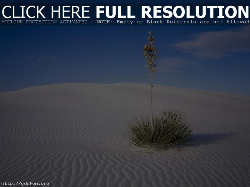 Обои Куст, пустыня, песок фото картики заставки