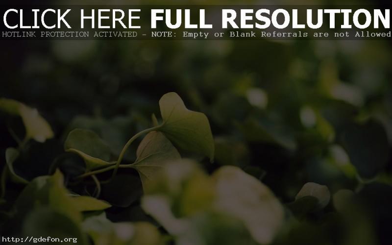 Обои Листья, трава, макро фото картики заставки