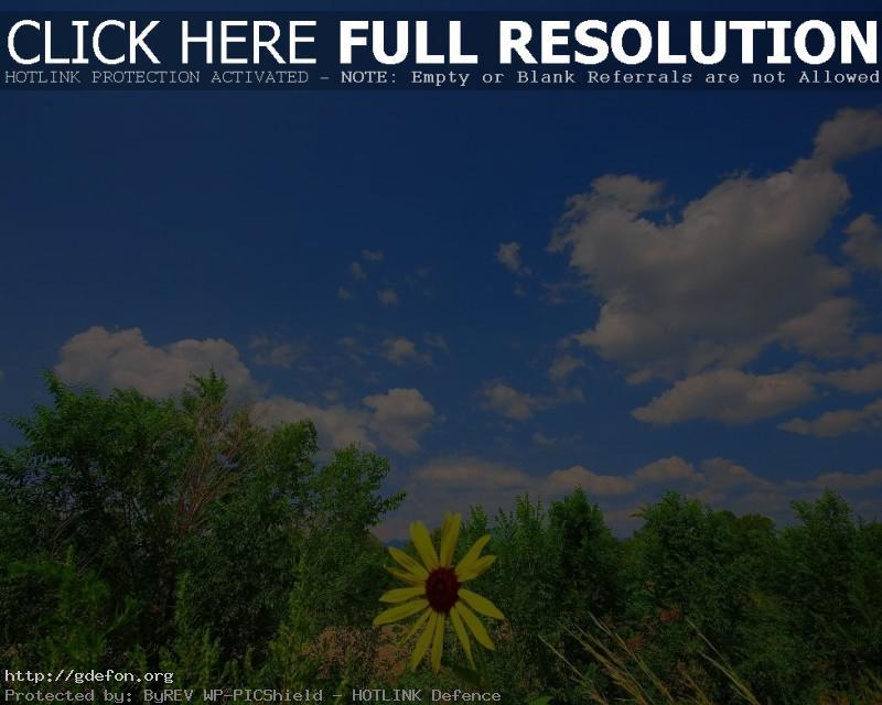 Обои Небо, ромашка, зелень фото картики заставки