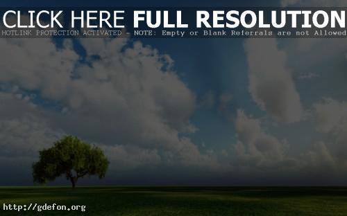 Обои Одинокое зеленое дерево в поле — скачать фото картики заставки