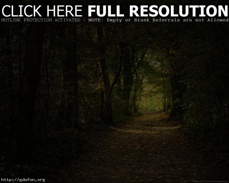 Обои Лес, тропа, деревья, листья фото картики заставки