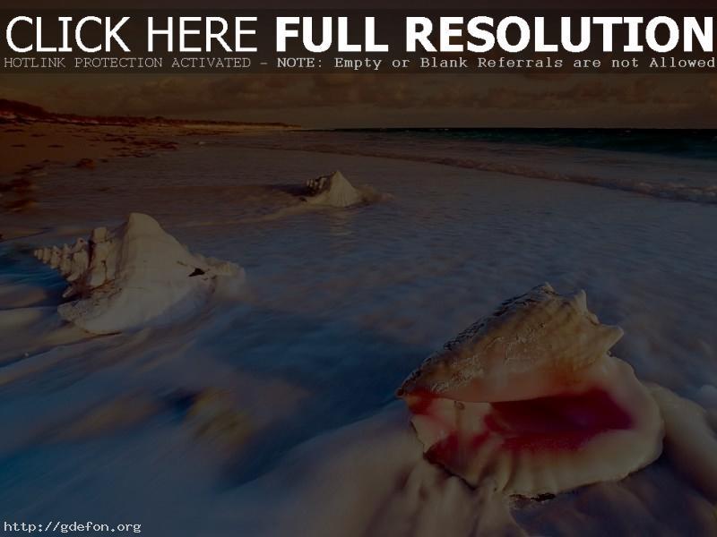 Обои Раковины, море, берег, пляж фото картики заставки