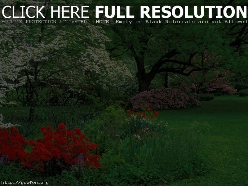 Обои Азалии, парк, деревья фото картики заставки
