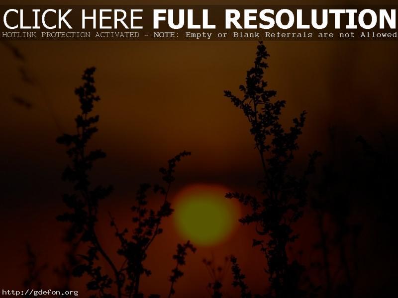 Обои Закат, солнце, растения фото картики заставки