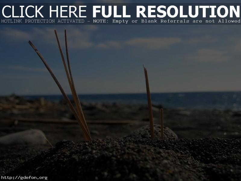 Обои макро, берег, песок фото картики заставки