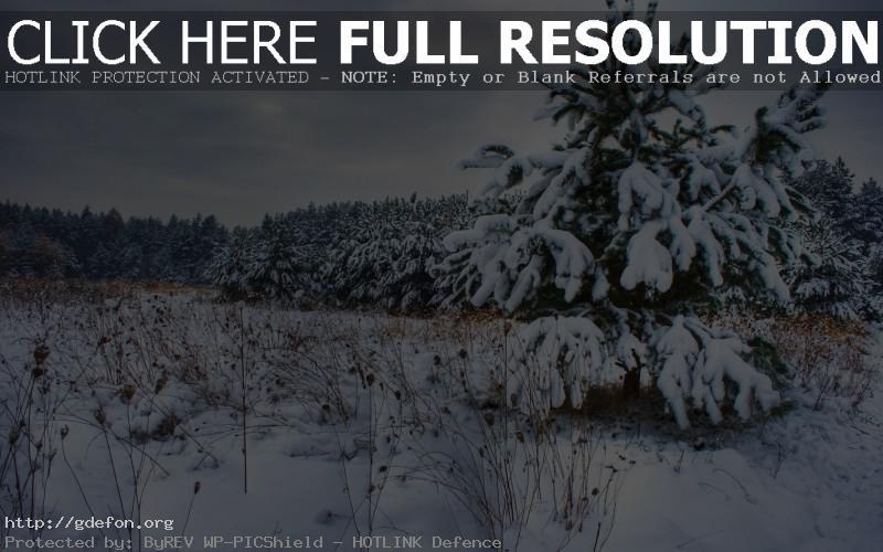 Обои Снег, зима, елка, лес фото картики заставки