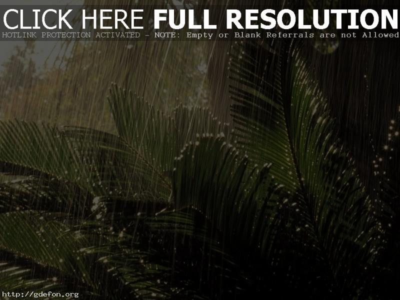 Обои Дождь в джунглях фото картики заставки