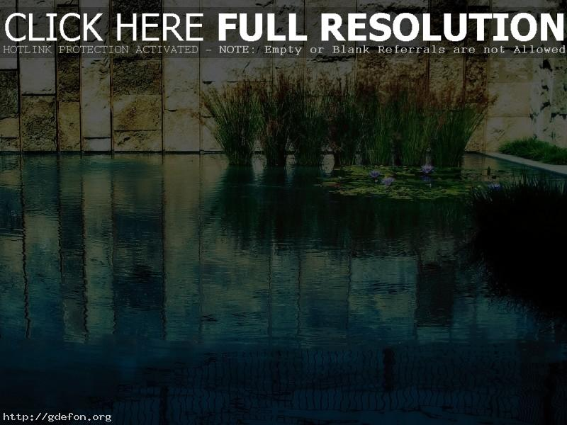 Обои Пруд, трава, вода, стена фото картики заставки