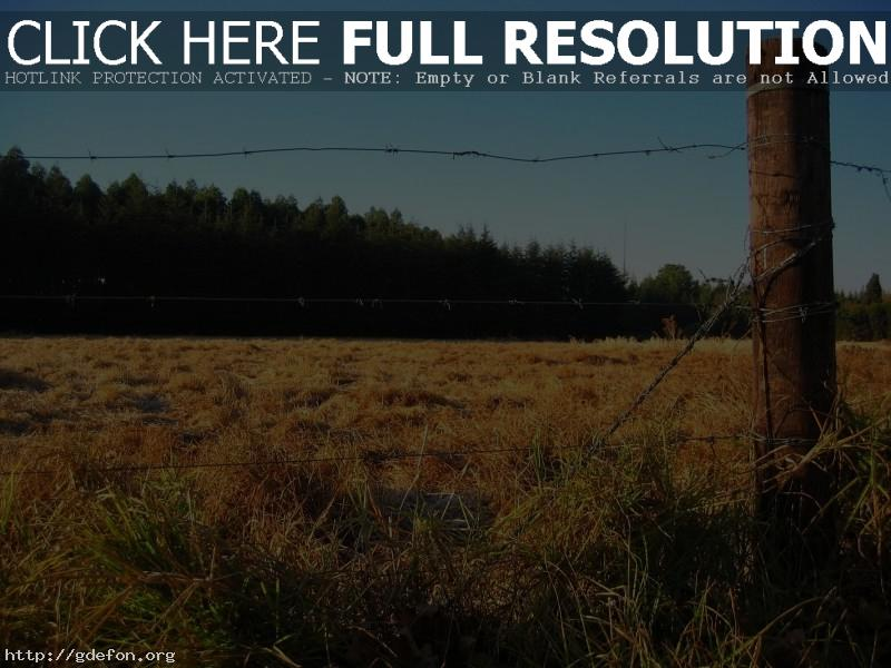 Обои Забор, поле, лес фото картики заставки