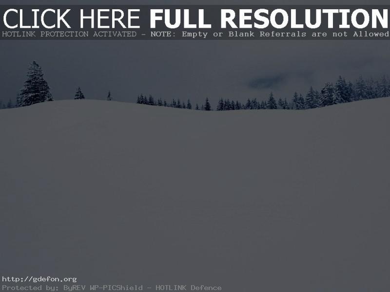 Обои Елки, зима, горизонт, снег фото картики заставки