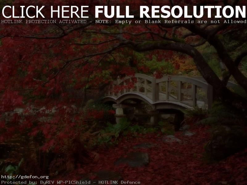 Обои Япония, сад, мост, осень фото картики заставки