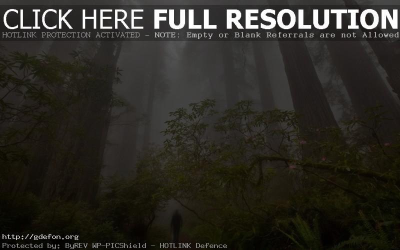 Обои Высокие деревья фото картики заставки