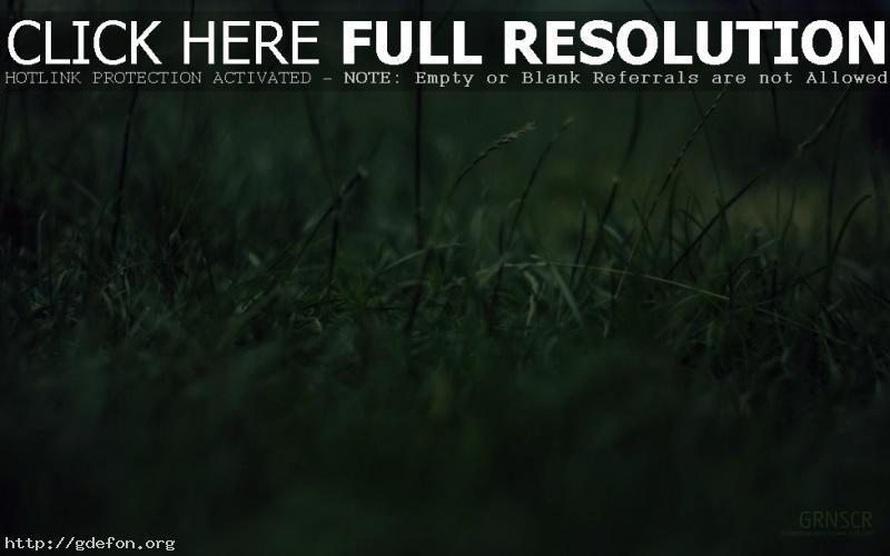 Обои Макро, трава, зелень фото картики заставки
