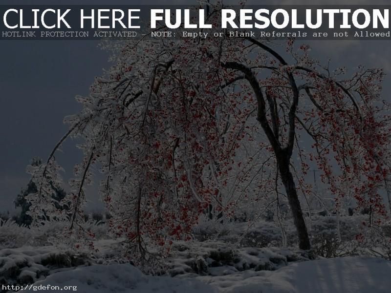 Обои Ягоды на снегу фото картики заставки