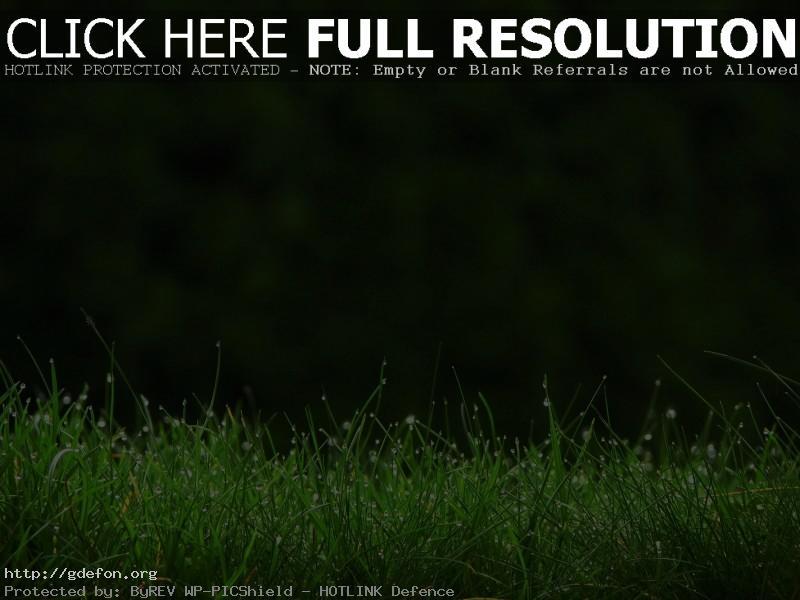Обои Трава, роса, капли, макро, зелень фото картики заставки