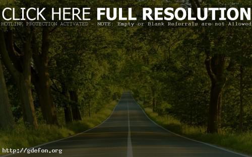 Обои Дорога в зелёном лесу фото картики заставки