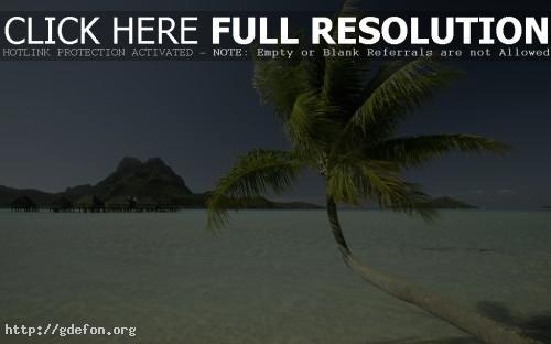 Обои Пальма, море, остров, дома фото картики заставки