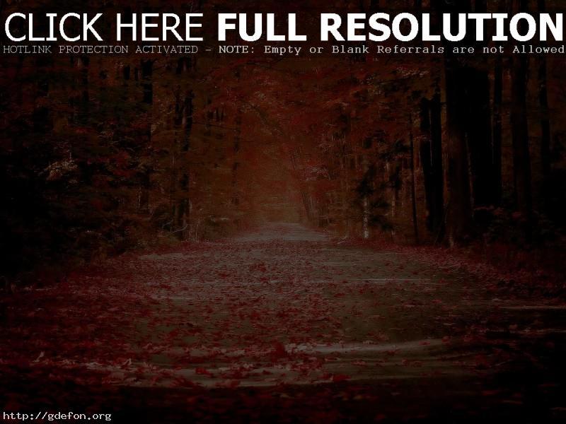 Обои Осень, листья, листопад, дорога, аллея фото картики заставки