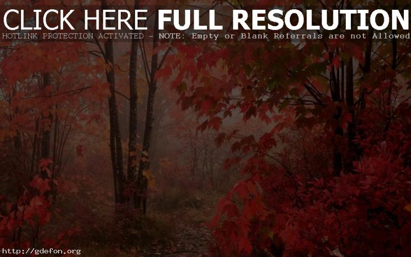 Обои Осень, листья, лес фото картики заставки