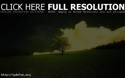 Обои Скоро закат, природы — одинокое дерево фото картики заставки