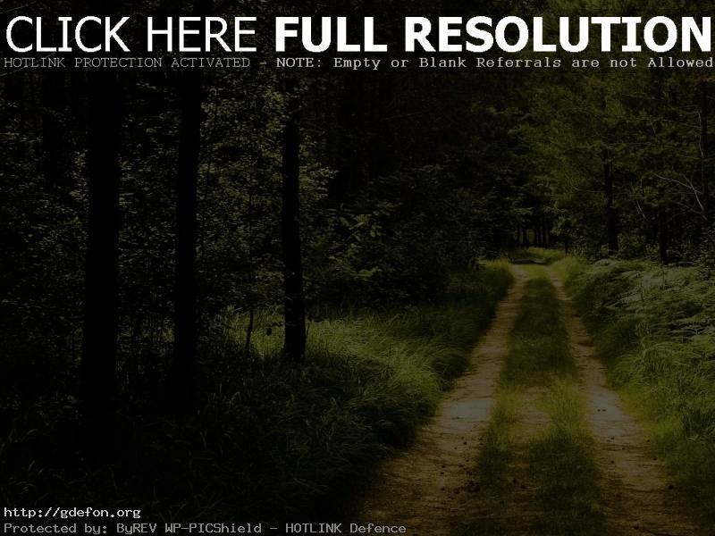 Обои Дорога, лес, тропа фото картики заставки