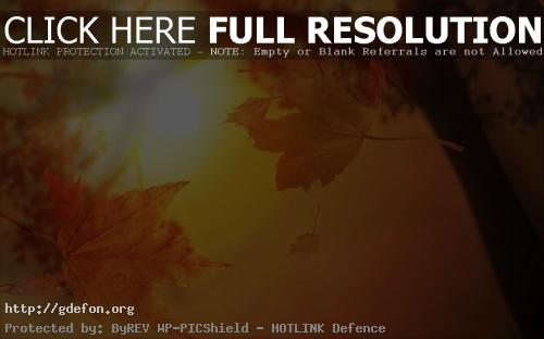 Обои Осенний блюз фото картики заставки