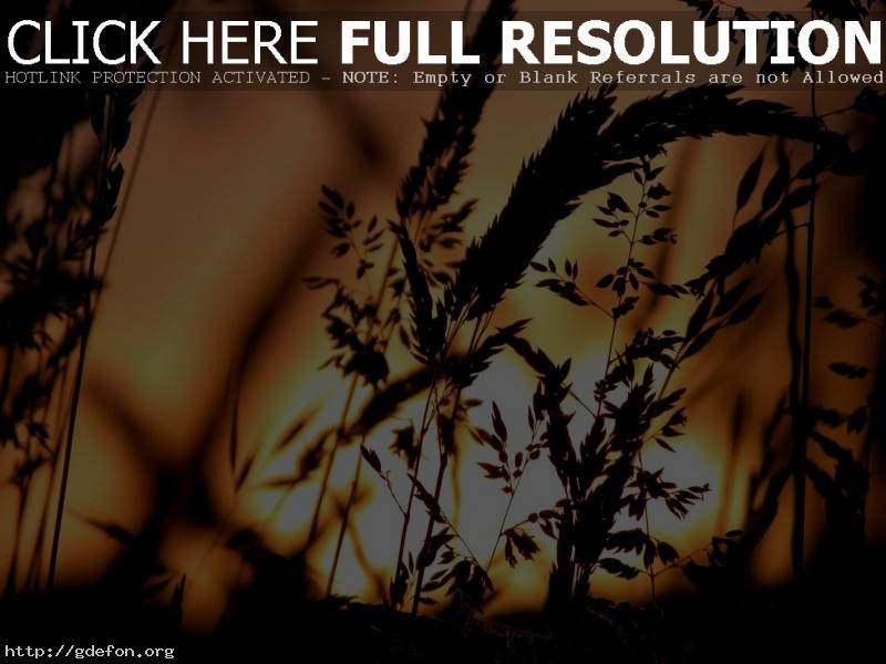 Обои Закат, трава, солнце фото картики заставки