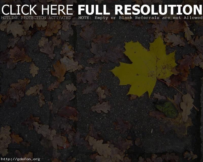 Обои Желтые листья на асфальте фото картики заставки