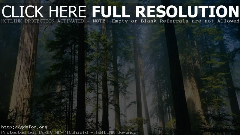 Обои Лес, деревья, стволы фото картики заставки