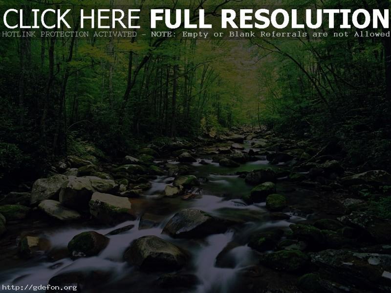 Обои Река, лес, камни фото картики заставки