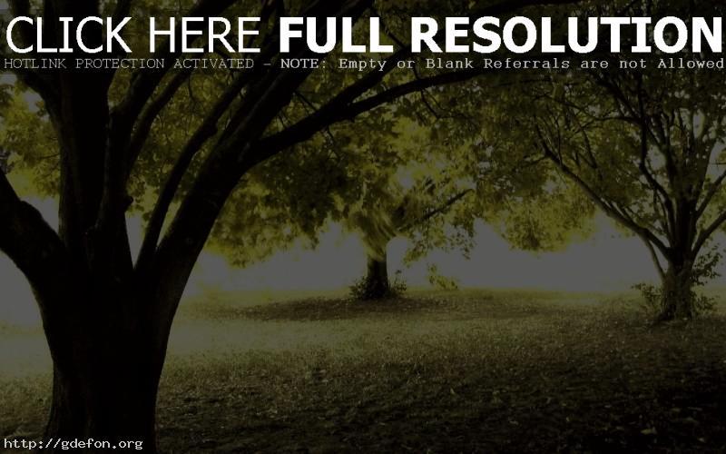 Обои осень, свет, деревья фото картики заставки