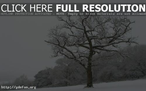 Обои Дерево в снегу фото картики заставки